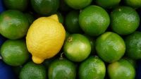 Fresh Adaila Lemon