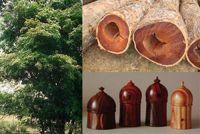 Cocobolo for sale