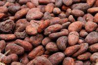 Cocoa Beans, Cocoa Powder, Coffee Beans