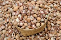 Areca Nuts for Sale