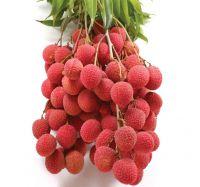 Vietnam fresh Lychee