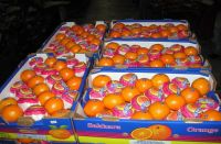 agricultural corps ,oils,vegetables, fruits