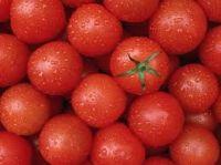 Farm Fresh Red Tomatoes