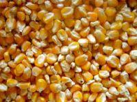 Yellow Corn #2 As Animal feed