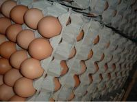 fresh table chicken eggs/ white and brown