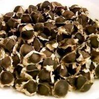Moringa Oleifera Seeds/Leaves//Oil
