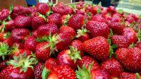 Best Quality Fresh Strawberry