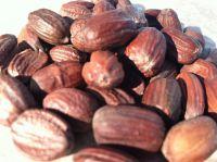 Organic Jojoba seed