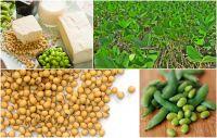 Bottom price high quality yunnan arabica green MUNG bean