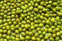 PRICE GREEN MUNG BEANS