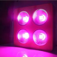 Hot Sale 600W 800W 1000W Double Chips LED Grow Light Full Spectrum For Veg/Bloom Hydroponic Planting EU AU US UK Plug