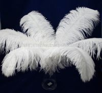 Quality Ostrich/Duck Feathers