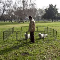various types of dog cages / pet dog cage / dog fences