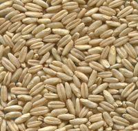 Raw Oats Seeds / Oat groats/Oat Grains / Oat kernels/Oat flakes