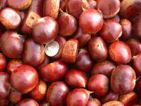 Quality chestnuts