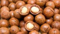 Cheap macadamia nuts