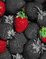 Cheap black strawberry seeds Available For Sale
