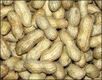 Raw Peanut Best Quality
