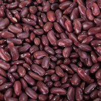 Dark Red Kidney bean 2017 crop