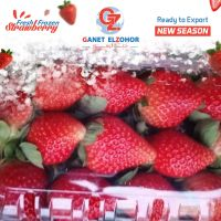 fresh strawberry suppliers