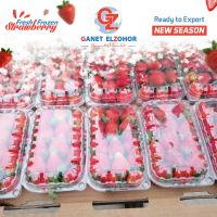 Fresh Strawberries suppliers