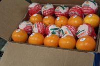 Fresh Organic Navel Oranges