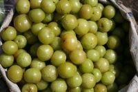 High Quality Amla Fruits (Fresh& Dried)