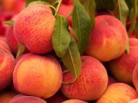 Fresh Egyptian Peach High Quality
