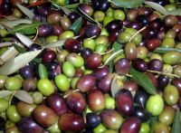 Good Quality fresh Olives Available