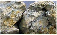 Lithotropic Limestone