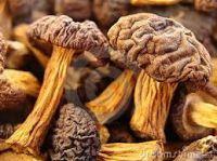 100% dried Mushroom export cheap price