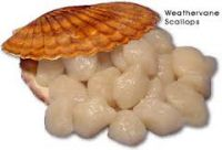 high quality frozen half shell scallop