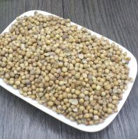 Wholesale Coriander Seeds coriander seed FOR SALE