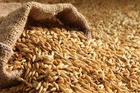 High quality Barley for Animal Feed