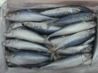 Fresh and Frozen Horse Mackerel Fish, Herring Fish , Dry Stockfish