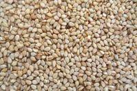 White and Brown Sesame seed sortex, sesame seed