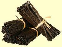 Vanilla Beans, Vanilla Tahitensis