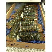 On Sale Nitrogen Frozen De-veined Lobster Tails Sizes 3/4oz up to 8/10oz