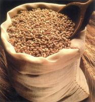 Wheat Grain (14.5 Protein)