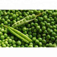 Wholesale Green Peas / Fresh Frozen Green Peas / Wholesale Fresh Peas