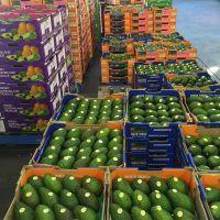 AVOCADO FRESH / Aguacate / PALTA HASS Fresh Fruit & Hass Avocados