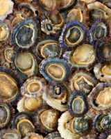 Dried Sea Limpets , Frozen Sea Limpets
