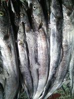 Frozen Ribbonfish
