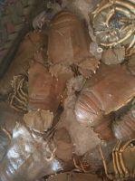 Frozen Slipper Lobsters / Sand Lobsters