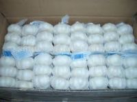 Fresh Farm Galic For Export good affordable  price