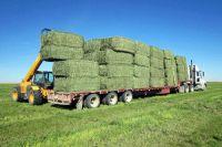 Alfalfa Hay, Oaten Hay, Rhodes Hay, Wheat Hay, Timothy Hay , Animal feed