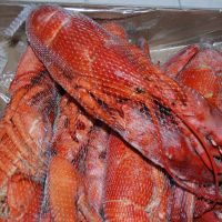 Frozen seafood Canadian lobster
