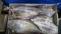 Greenland Halibut (Whole round, fillet, portions available)