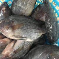 Best Quality Frozen Tilapia Whole Round Price 300-400g Fresh Fish