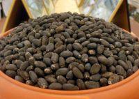 Current Stock  Jatropha Seeds for sale